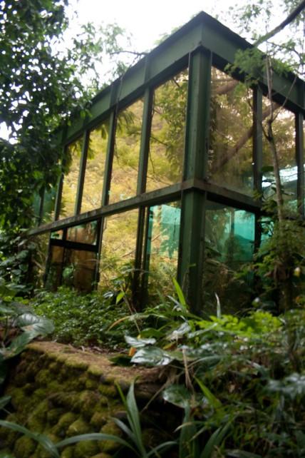 waipio tea house